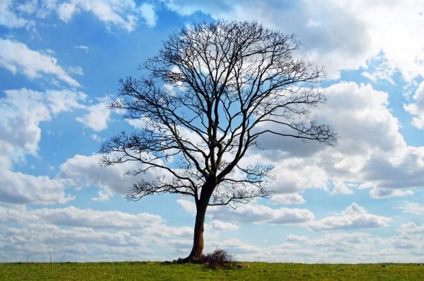 tree-164915