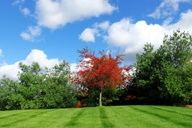 red-tree-220133